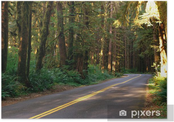 Two Lane Road Cuts Through Rainforest Poster - Trees