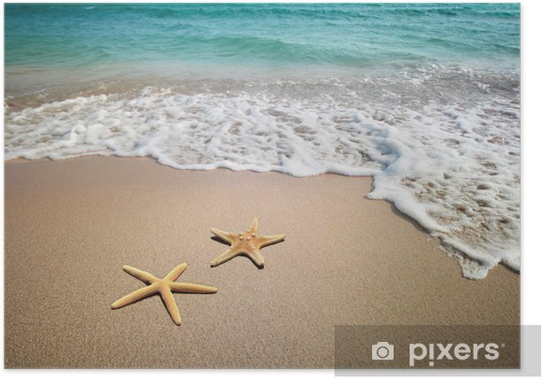 two starfish on a beach Poster - Themes