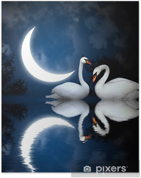 Two swans Poster - Swans