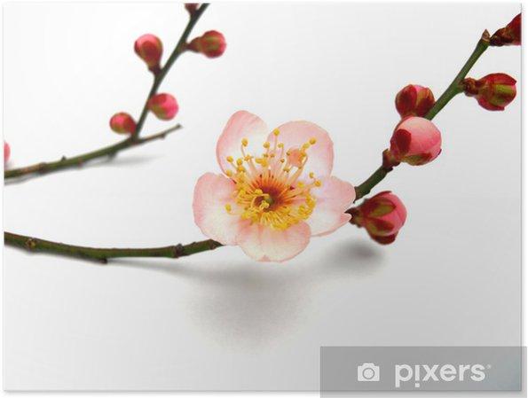Poster Umeno Hana - Fleurs