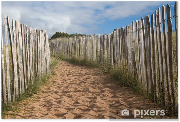 Poster Un chemin de sable dans les dunes avec une clôture en bois - Europe