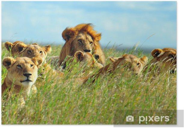 Poster Un groupe de lions. Parc national du Serengeti, Tanzanie - Thèmes