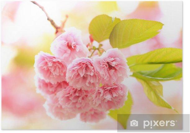 Póster Una flor de cerezo de doble - Flores