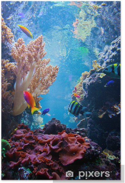 Underwater scene with fish, coral reef Poster - Coral reef