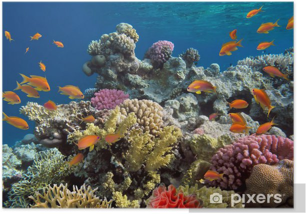 Underwater shoot of vivid coral reef with a fishes Poster - Coral reef