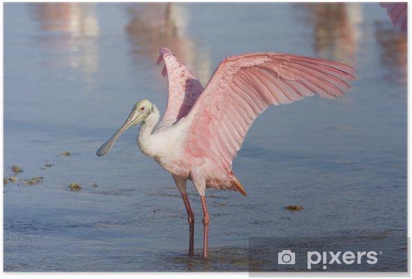Poster Une Spatule rose battant des ailes pour les sécher - Oiseaux