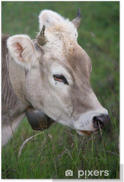 Póster Vaca - Mamíferos