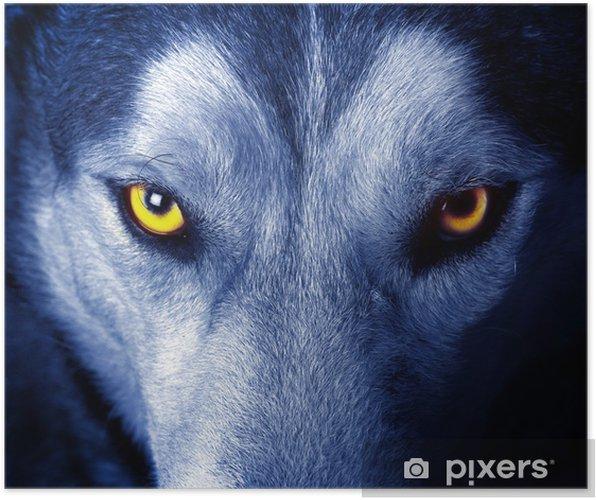 Poster Vackra ögon en vild varg. - Teman