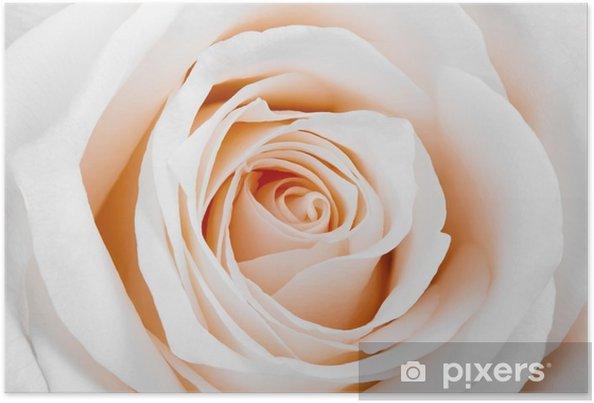 Poster Vackra vita ros - Teman