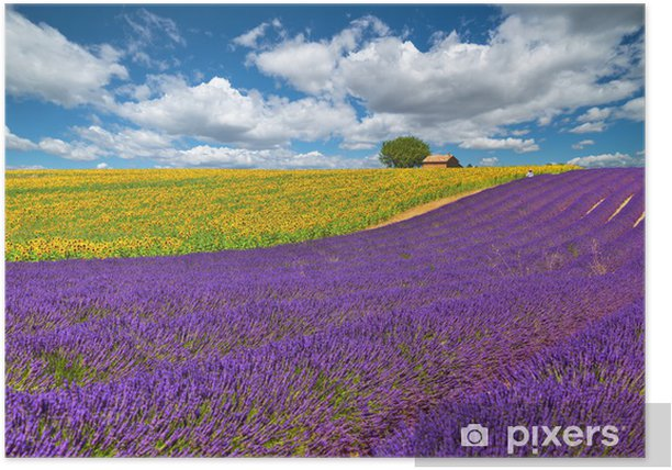 Poster Valensole - Europe