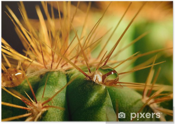 Poster Vatten droppe på kaktus - Växter