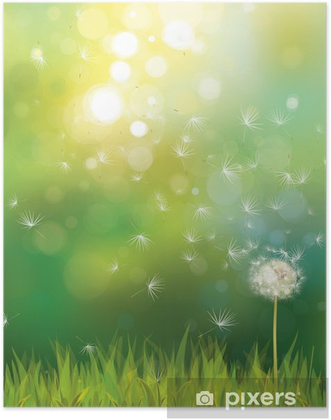 55f7af0c8f8c3 Vector of spring background with white dandelion. Poster • Pixers ...
