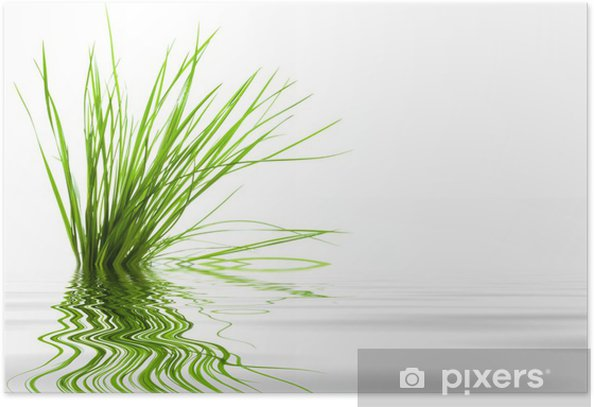 Poster Vert gras, reflets de l'eau - Plantes