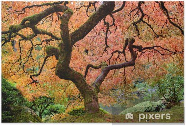 Póster Viejo árbol de arce japonés en otoño - Otoño