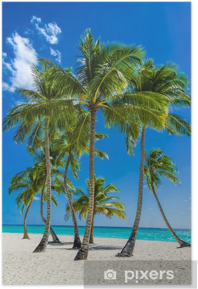 View of an exotic beach with tall palm trees and yellow sand Poster - Palm trees