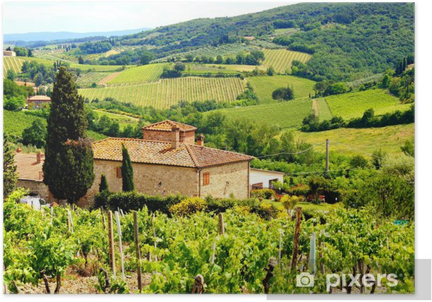 View through vineyards with stone house, Tuscany, Italy Poster - Themes