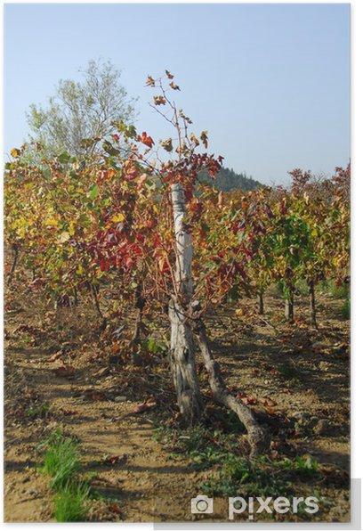 vigne ardèche Poster - Plants