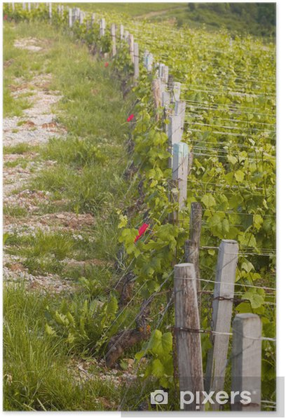 Vineyards in Burgundy Poster - Agriculture