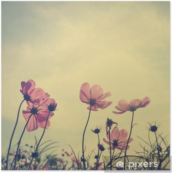 Poster Vintage Cosmos bloemen in zonsondergang tijd - Stijlen