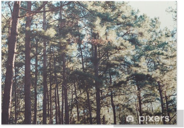 vintage nature background of forest pine tree. Poster - Plants and Flowers