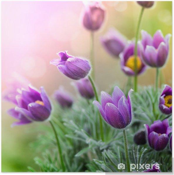 Poster Violet Fleurs de printemps - Thèmes