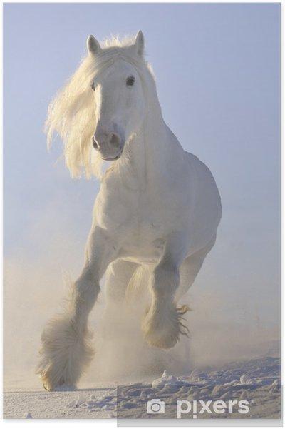 Poster Vit häst kör galopp på vintern - Teman