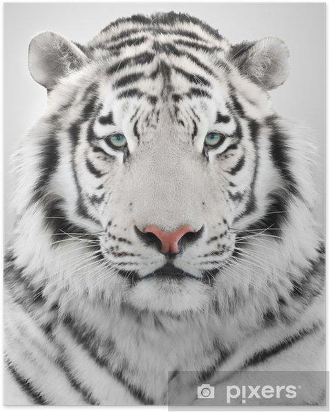 Poster Vit tiger - Teman