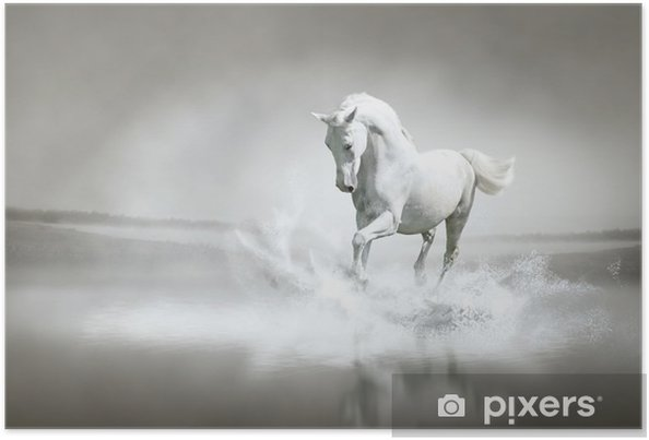 Poster Vita hästen går genom vatten - Teman