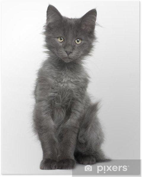 Fonkelnieuw Poster Vooraanzicht van de Noorse Boskat kitten, zittend • Pixers FJ-54