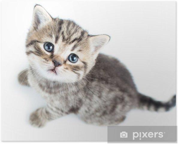 Poster vue de dessus de b b chat chaton sur fond blanc pixers nous vivons pour changer - Photo de bebe chat ...
