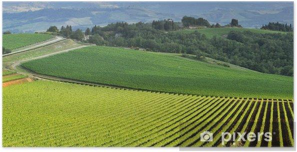 Poster Vue panoramique d'un vignoble dans la verte campagne toscane - Europe