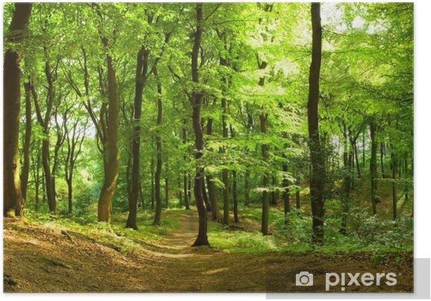 Waldweg im Sommer Poster - Destinations