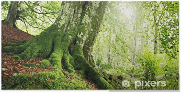 Poster Waldweg - Forêt