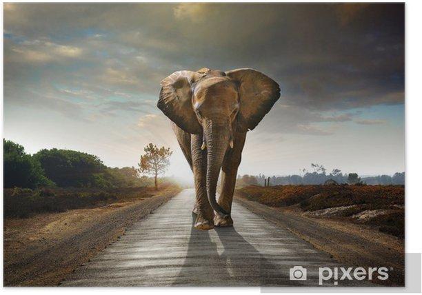 Walking Elephant Poster - Elephants