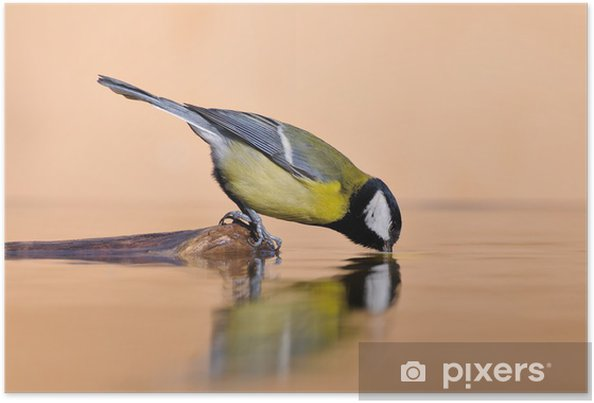 Poster Water reflections - Oiseaux