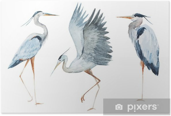 Poster Watercolor reiger vogels - Dieren