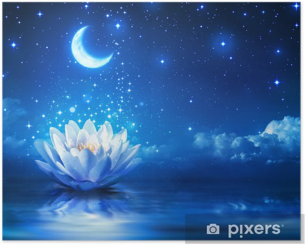waterlily and moon in starry night - magic background Poster - Destinations