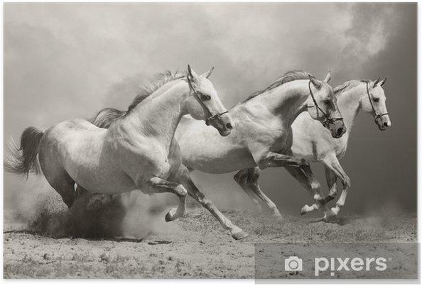 white horses in dust Poster -