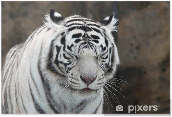 Póster White tiger - Temas