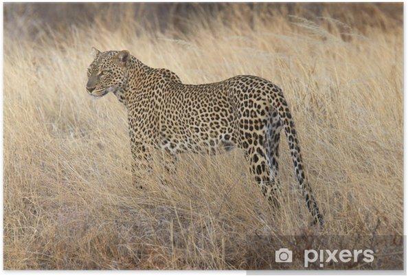 Poster Wild luipaard staande in geel gras - Zoogdieren