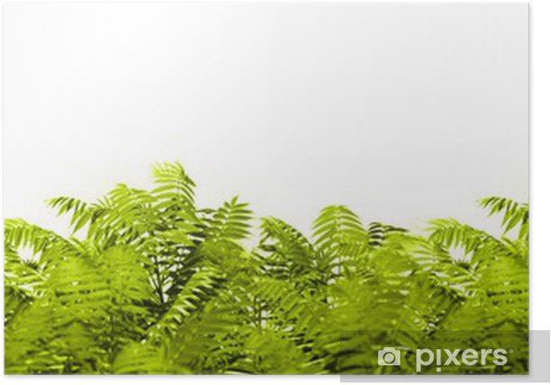 Wildnis Poster - Plants