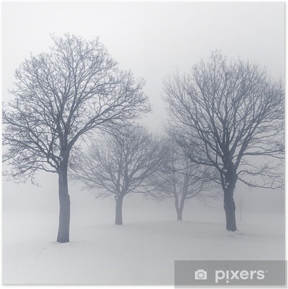 Winter trees in fog Poster - Themes