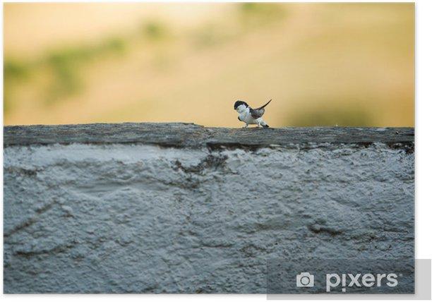 Poster Witgekalkte muur zwaluw - Europa
