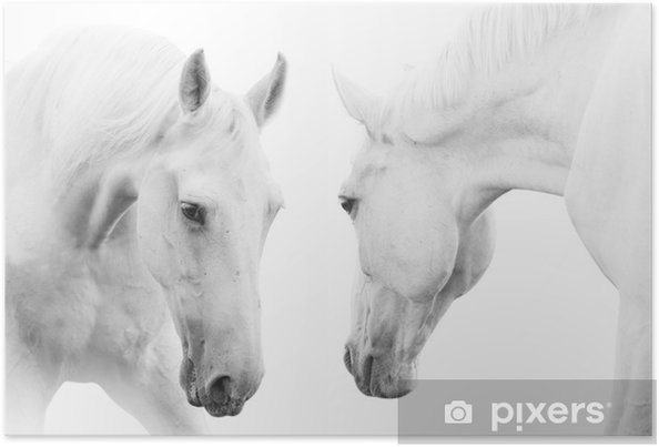 Poster Witte paarden - Thema's