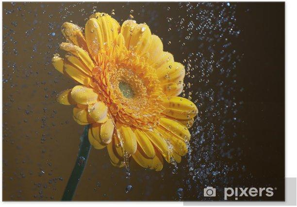 Yellow gerbera. Poster - Flowers