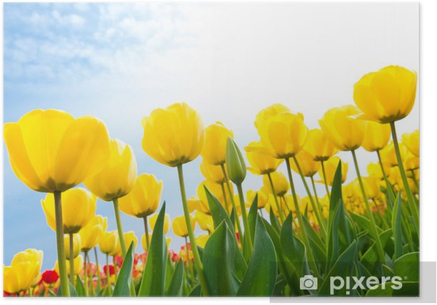 Poster Yellow tulips - Thèmes