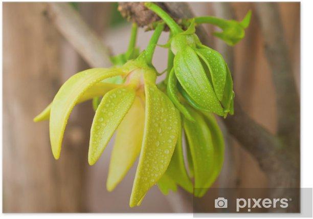 Poster Ylang-ylang bloemen op boom, Thailand - Bloemen