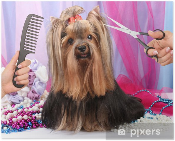 Yorkshire Terrier Grooming At The Salon For Dogs Poster Pixers