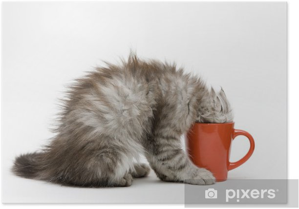 Young cat plays with a cup Poster - Mammals