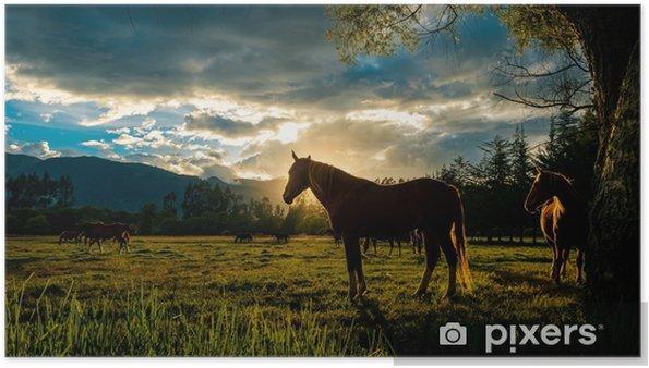 Poster Zonsondergang paard - Landschappen